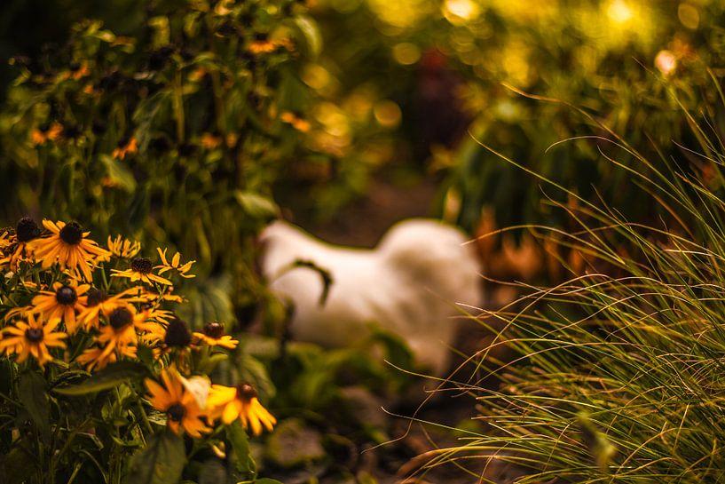 herfst, najaar, bloemen, kip van Tara Kiers