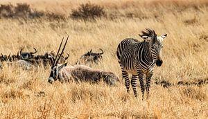 Zebra: Landschap Afrika...