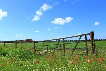 Boerenland van Landelijke foto's uit Brabant