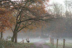 marche froide d'automne sur Tania Perneel