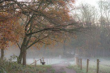 koude herfstwandeling van Tania Perneel