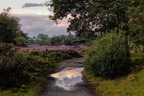 It Mandefjild Bakkeveen Heide