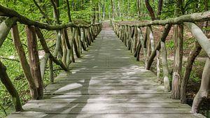 The Forest Bridge