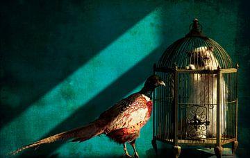 Clever bird sur Carla Broekhuizen