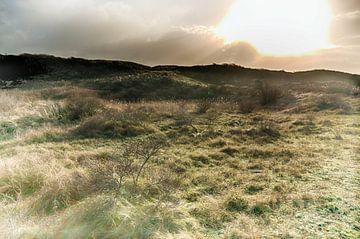 Dünenland von Erik Reijnders