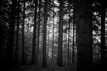 Mysterieus bos von Roel Van Cauwenberghe