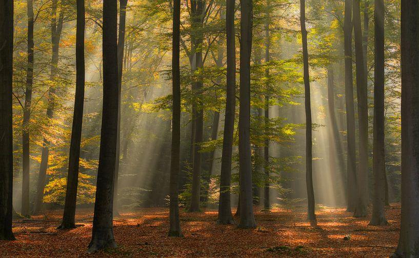 Prachtig licht in het Mastbos in Breda van Jos Pannekoek