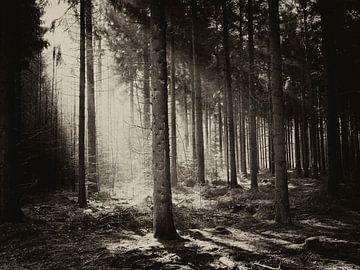 Licht in het bos van Elke van Hessem
