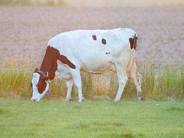 Koe in zonlicht van Wendy Tellier - Vastenhouw