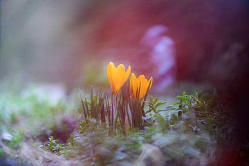 bloemen part 51 van Tania Perneel