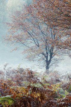 Misty Morning van Bob Vandenberg