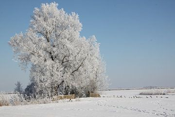 Bomen met rijp van Ruud Wijnands
