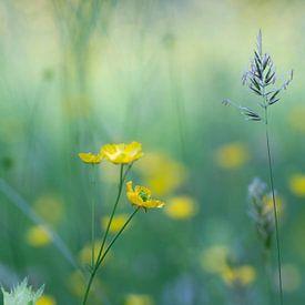 fleurs sauvages sur Birgitte Bergman