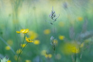 wilde Blumen von Birgitte Bergman