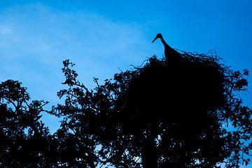 Silhouet - Ooievaar op het nest van Marcel Runhart
