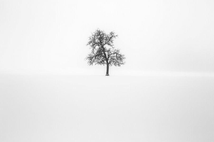 Minimalisme | Eenzame boom in sneeuw van Steven Dijkshoorn