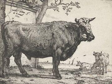 Bull, Paulus Potter, 1650.
