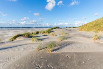 Dünen und Strandhafer am Strand von Terschelling von Sander Groffen