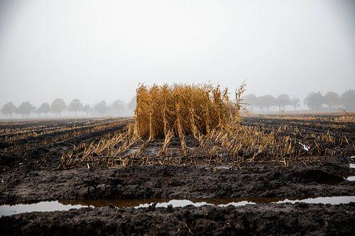 Mais van Jan Sportel Photography