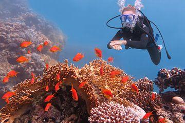 Jonge Nederlandse vrouw duikt in zee bij koraalrif en school oranje vissen van Ben Schonewille