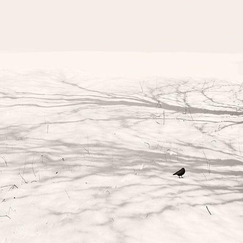 Tanz mit dem Schatten von Lena Weisbek