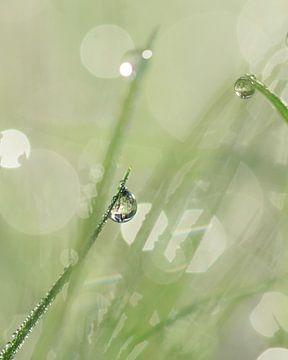 Gras met dauw van Kim de Been