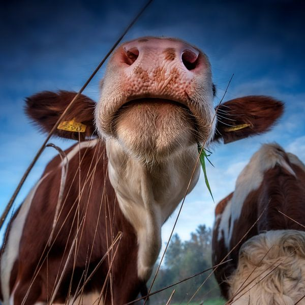 Nose between straws van Ruud Peters