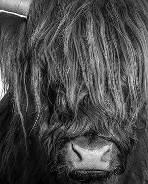 Schotse Hooglander in zwart-wit van Marjolein van Middelkoop