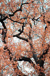 Chêne pédonculé à l'automne sur Made By Jane