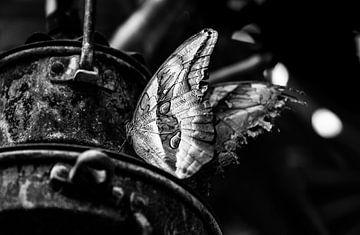 Uil Vlinder op een lamp zwart wit von henry hummel