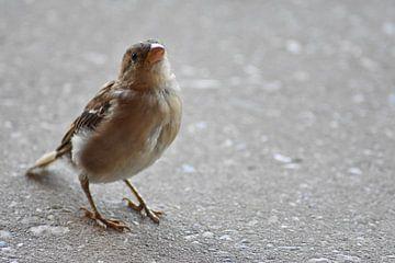 Een nieuwsgierig klein vogeltje van Highthorn Photography