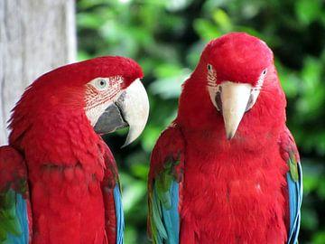 Papegaaien van richard de bruyn