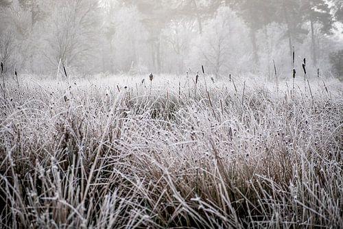 Winterlandschap op de Kampina van