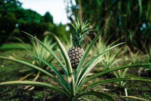Hawaï-ananas