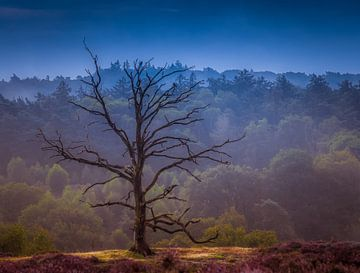 Lone tree Posbank. van Remko Ongersma