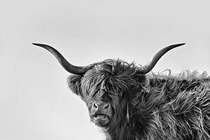 Lustige Schottische Hochlandkuh in Schwarz-Weiß von