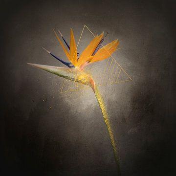 Herrliche Blume - Die Strelitzie | Vintage-Stil gold von Melanie Viola