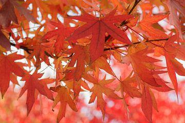 Het rood van de herfst van Birgitte Bergman