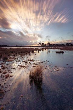 Strabrechtse Heide 292 van Desh amer
