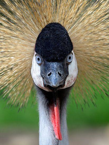Kraanvogel van Jan  Soeterbroek