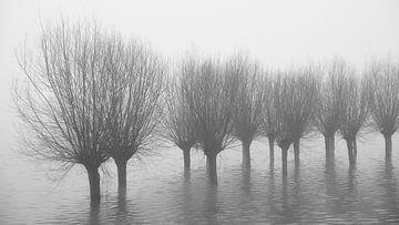 Wilgen in het water van Cor de Hamer