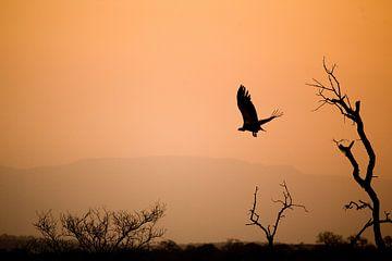 African sunset sur Jasper van der Meij