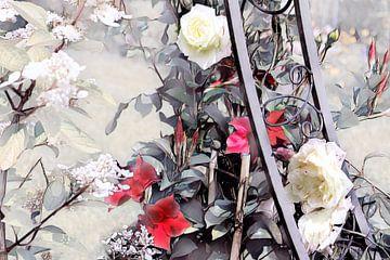 Rosenranke Aquarellmalerei rot-weiß