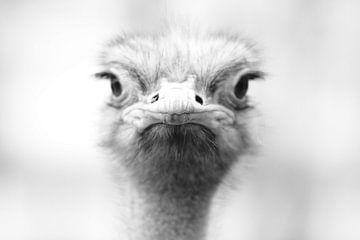 Struisvogel portret van Ima Rhebok
