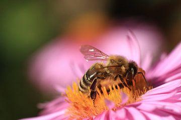 Bees van Klaus-Dieter Schulze