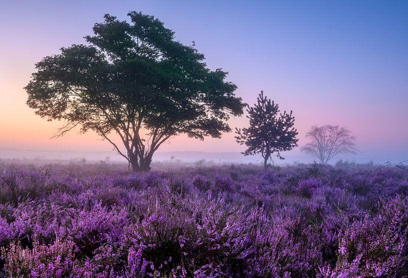Bomen op de paarse heide van Ellen van den Doel