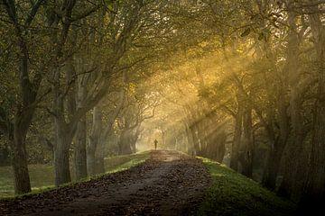Magische zonnestralen in de herfst op Notendijk bij Heerlijkheid Mariënwaerdt van Moetwil en van Dijk - Fotografie