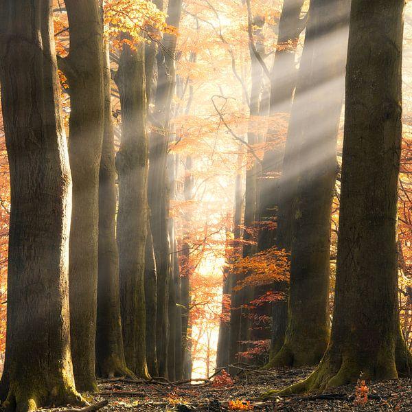 Herfst lichten van Fabrizio Micciche