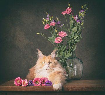 Creme maine coon en zijn prachtige bloemen van mirka koot