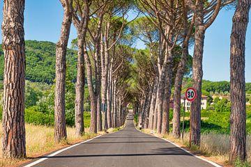 Pijnbomen in Toscane van eric van der eijk